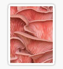 Pink oyster mushroom pleurotus  Sticker