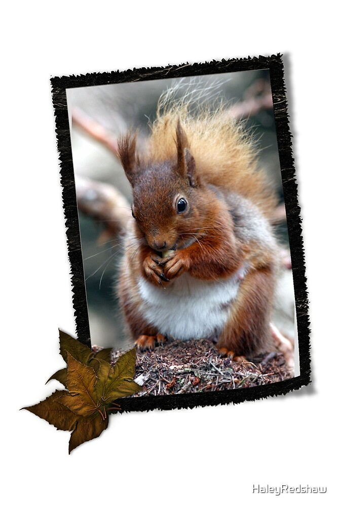 Hungry red squirrel in frame by HaleyRedshaw