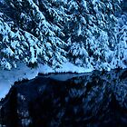 The cold Forest Lake in the Evening by Imi Koetz