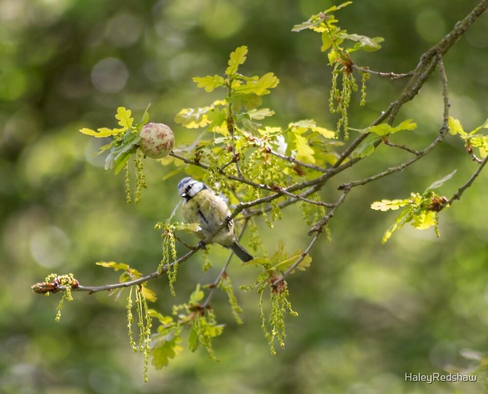 Summer bird by HaleyRedshaw