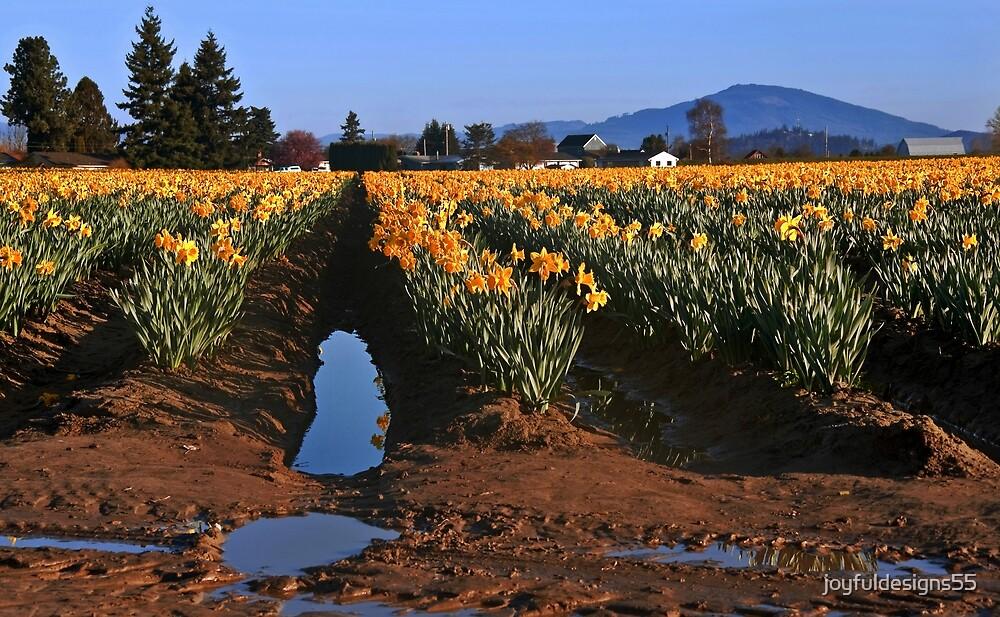 Daffodil Flower Field After Rain by joyfuldesigns55