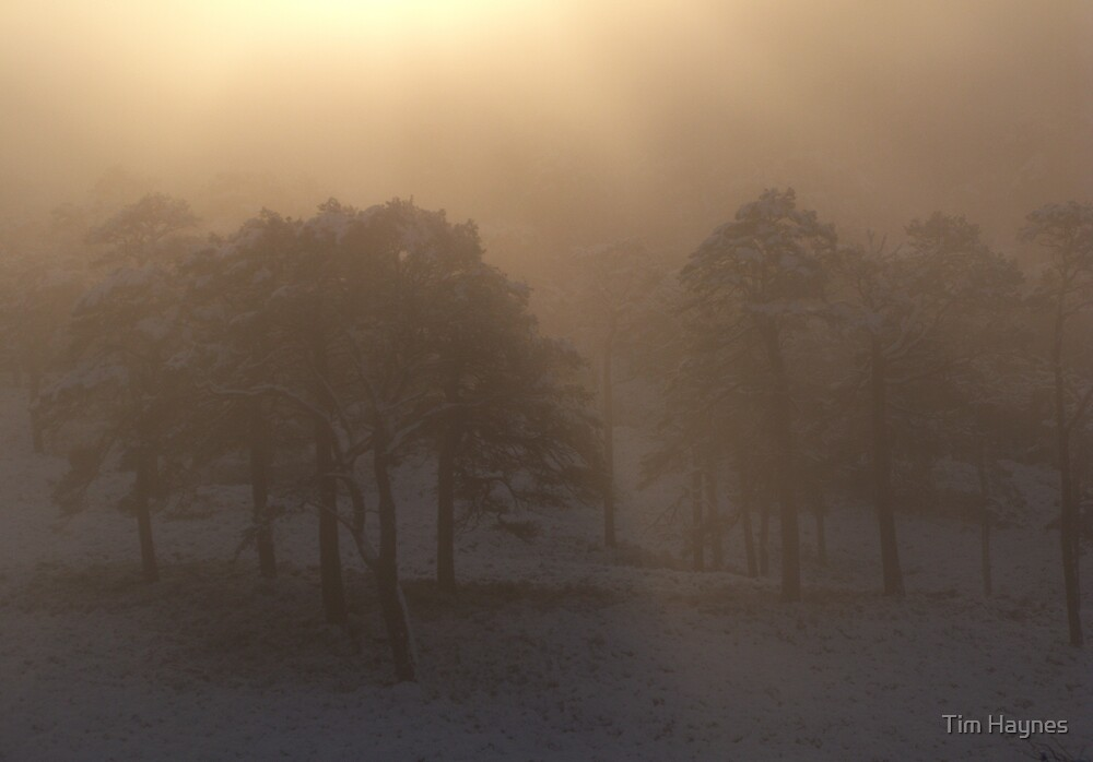 Misty Winter Morning, Glen Affric by Tim Haynes