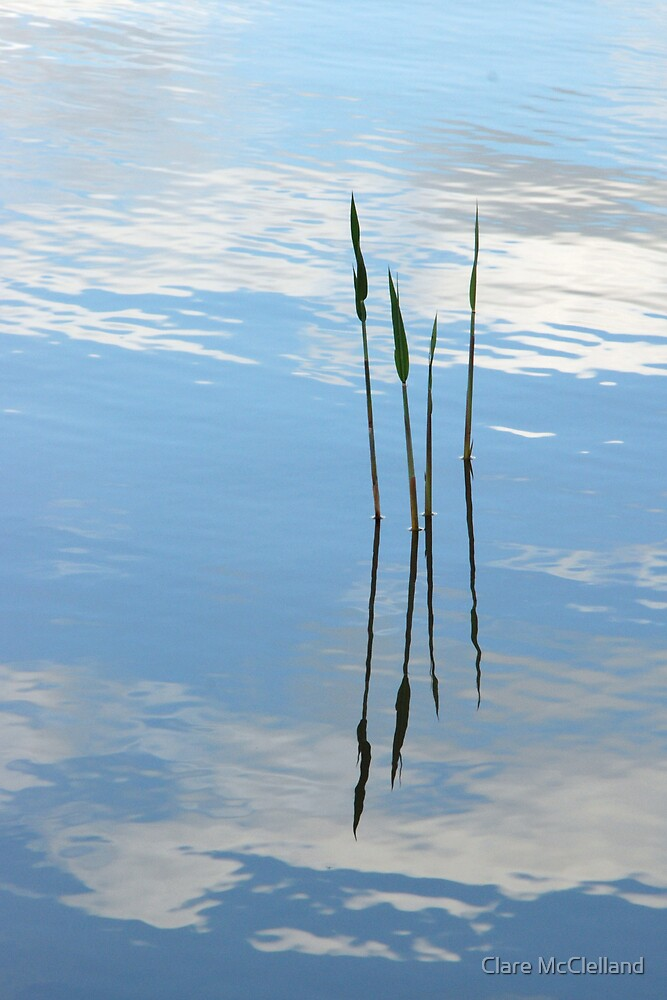 A Little Reflection by Clare McClelland