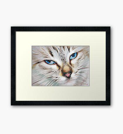 Snow Cat Framed Print
