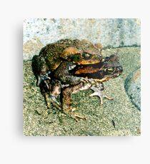Frogs Humping Metal Print