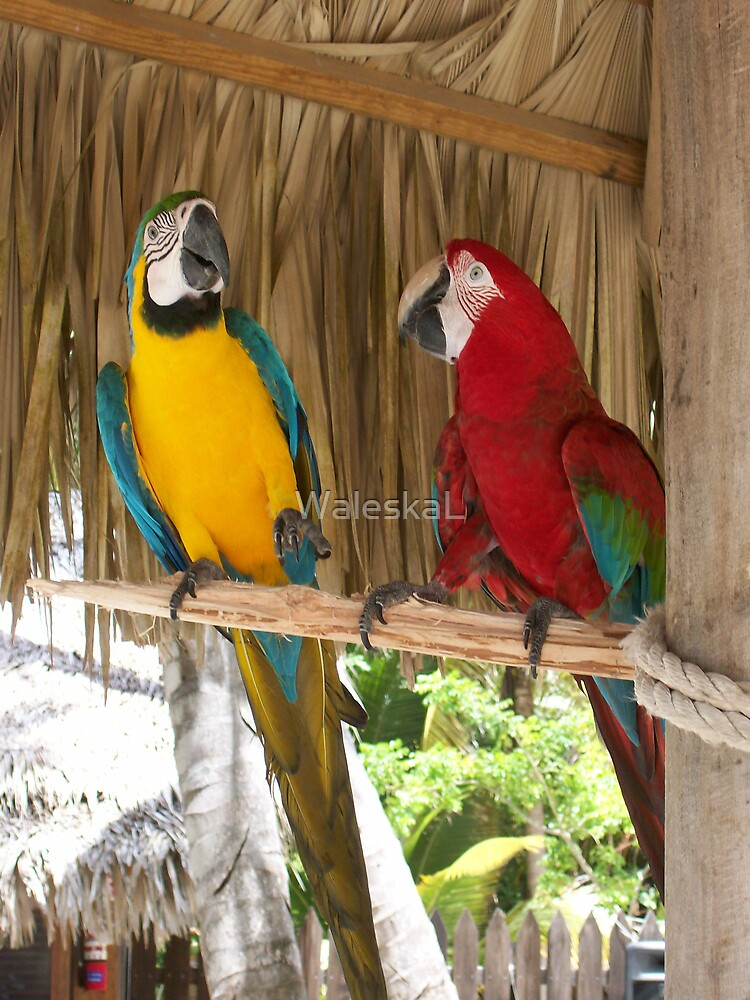 Pretty Birds by WaleskaL