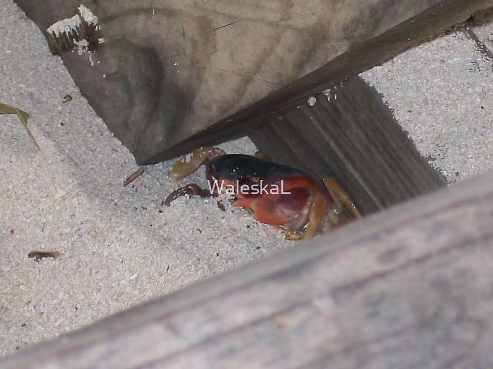 Crab by WaleskaL