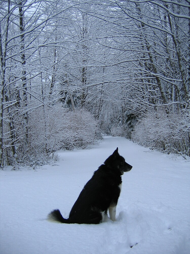 A Husky in her element. by Nina Toulmin