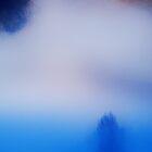 Tree in Fog by Imi Koetz
