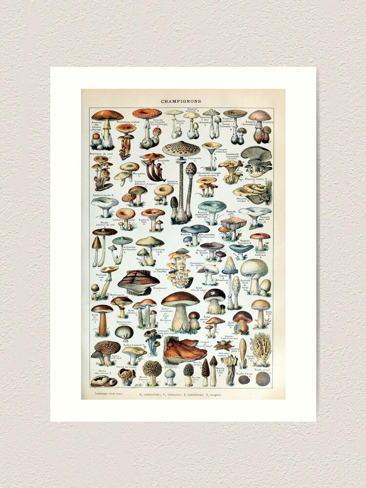 Alternate view of Vintage Edible Mushroom Chart Art Print