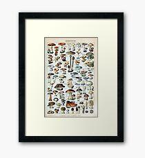 Vintage Edible Mushroom Chart Framed Print