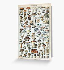 Vintage Edible Mushroom Chart Greeting Card