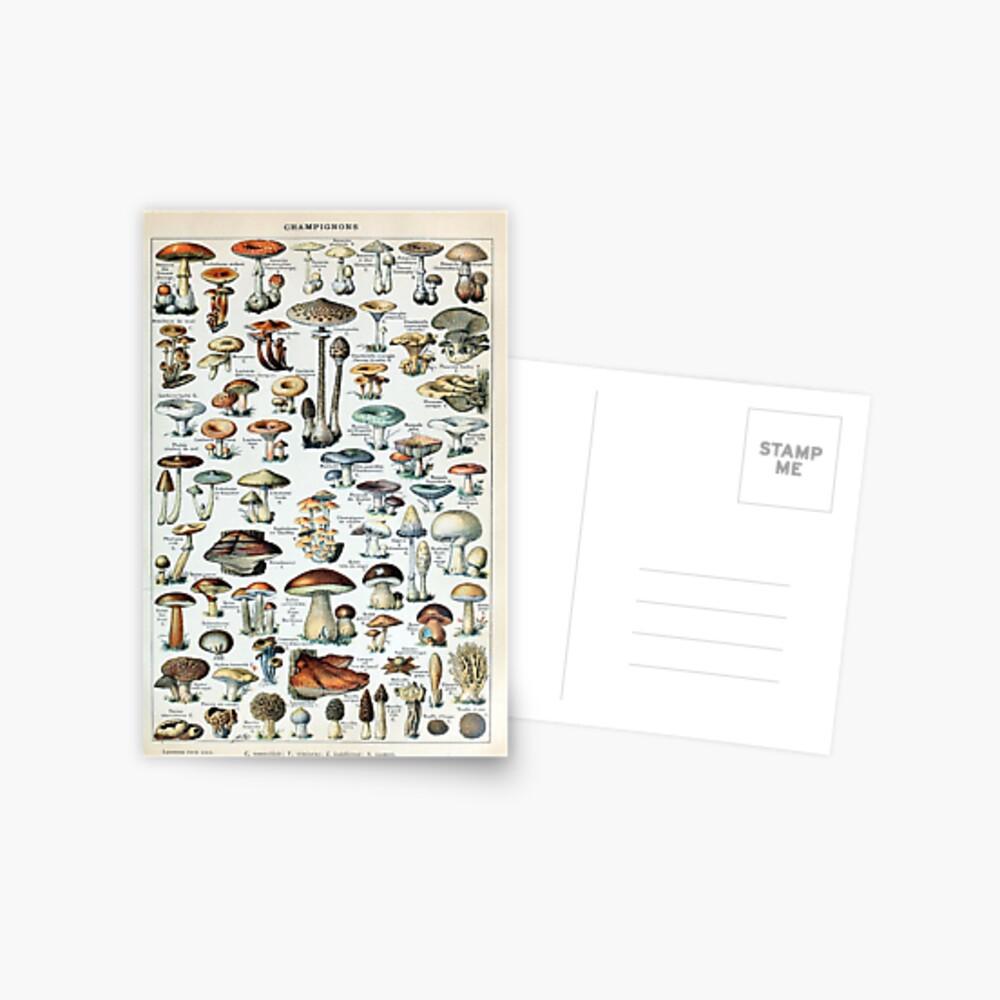 Vintage Edible Mushroom Chart Postcard