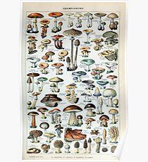 Vintage Edible Mushroom Chart Poster