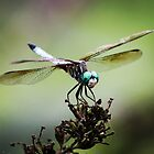 Dragonfly by bwatkinsphoto