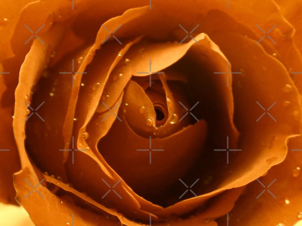 Rose by nasera