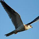 White Kite's First Flight by DARRIN ALDRIDGE