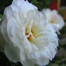 Soft Floral by Greta  McLaughlin