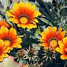 Summer Colour by Richard  Windeyer