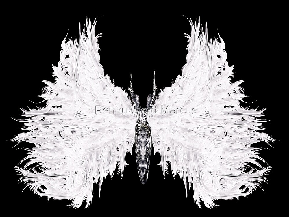 White Moth by Penny Ward Marcus