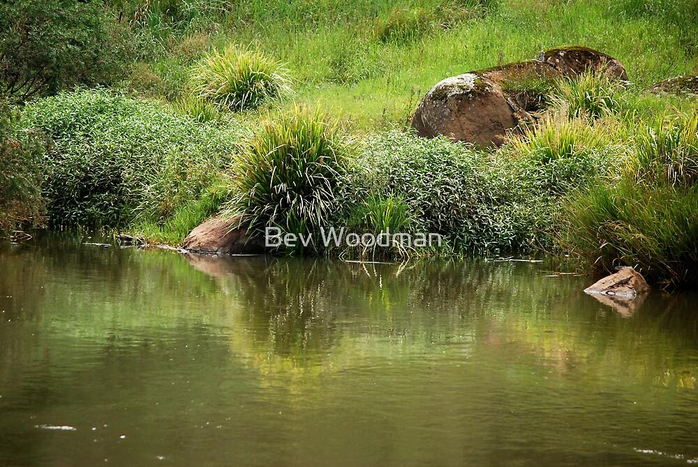 Lush Green - Manning River NSW by Bev Woodman