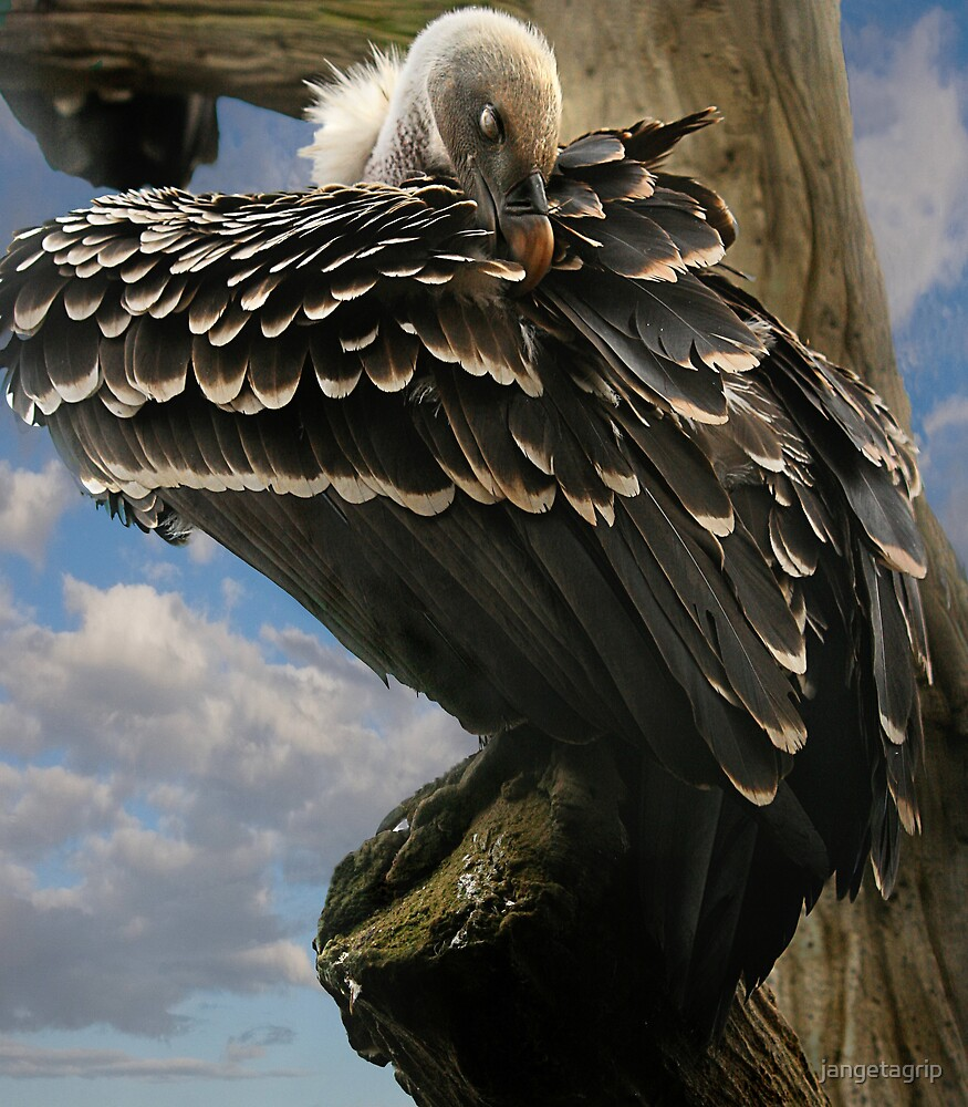 vulture by jangetagrip