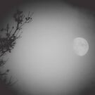 WOLF MOON by DianaMatisz