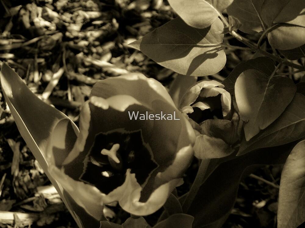 Velvet Sisters by WaleskaL