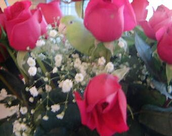 Loving the Roses by WaleskaL