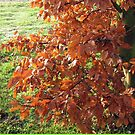 Herbstlaub und mattiertes Feld in Essex von BlueMoonRose