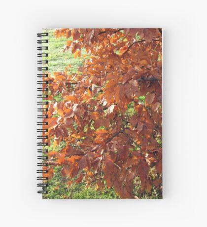 Herbstlaub und mattiertes Feld in Essex Spiralblock