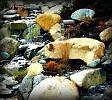 coloured rocks by sheilamunk