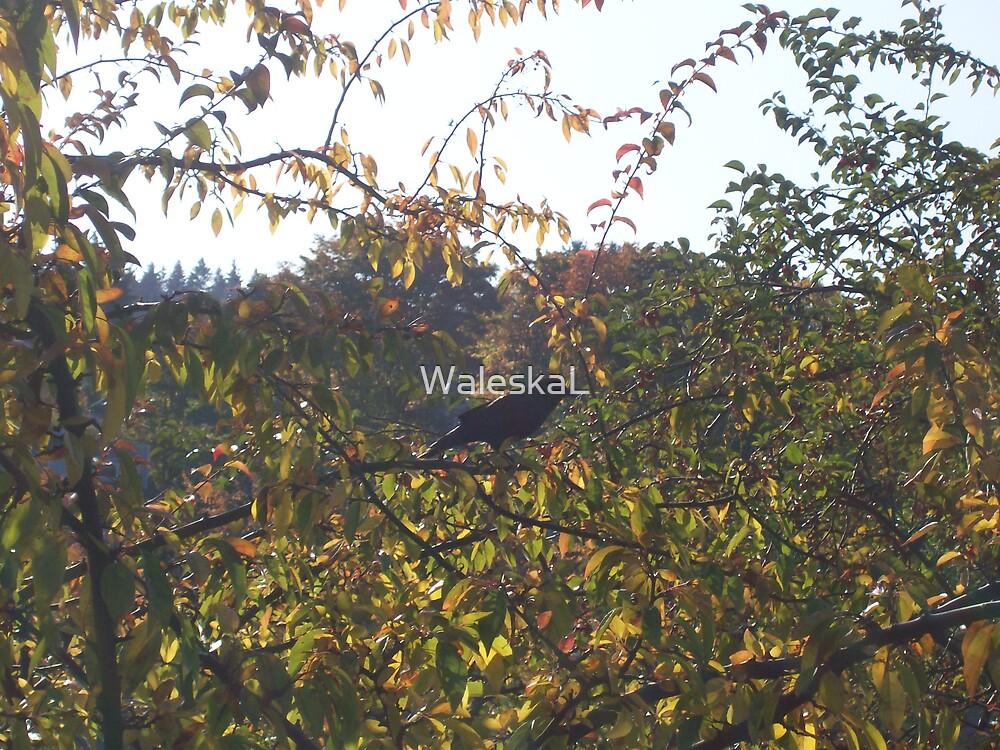 Watch the birdie by WaleskaL