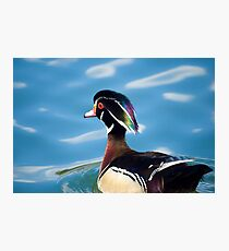 colourful male wood duck in a pond Photographic Print