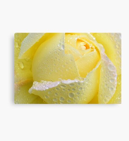 Rose with pearls Canvas Print