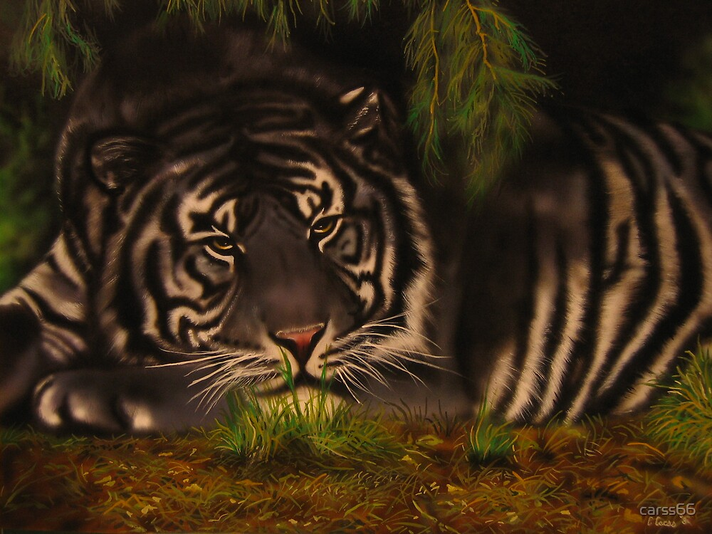 Quot Maltese Tiger Quot By Carss66 Redbubble