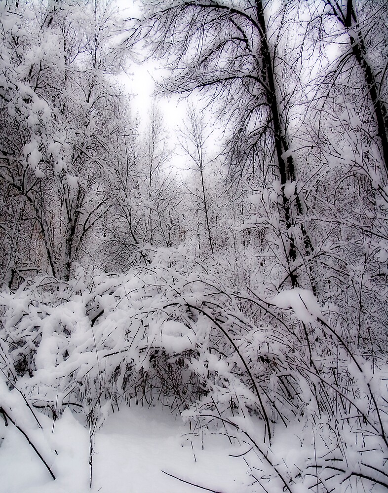 First Snowfall by DavidHoefer