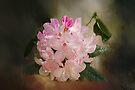 Rhododendron  by Elaine Teague