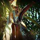 Top of the trunk of Palm Tree by EdsMum