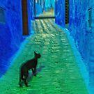 Chechaouen cat by Geraldine Lefoe