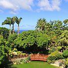 Deshaies Botanical Gardens by Timothy Gass