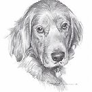 Irish setter drawing by Mike Theuer