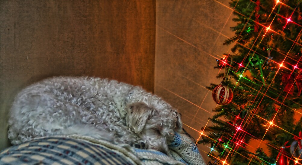 Christmas Puppy by GPMPhotography