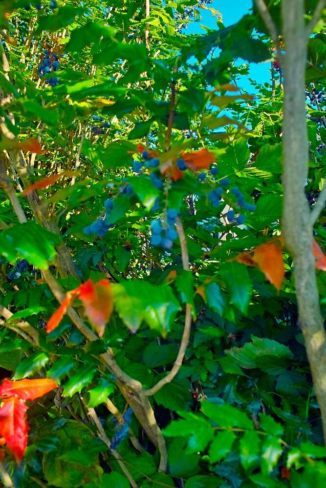 Porphyria Hedge in Summer by Priscilla Turner