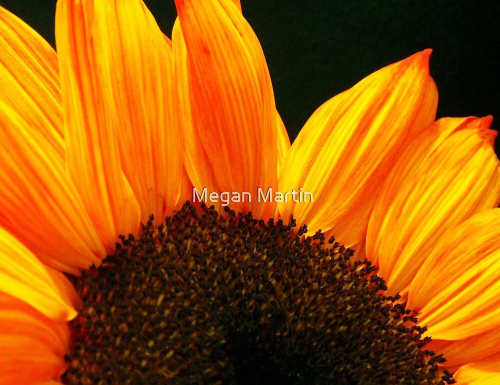 Sunflower Fire by Megan Martin