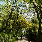 Person walking along path way, through sunny woodland by Victoria Ashman