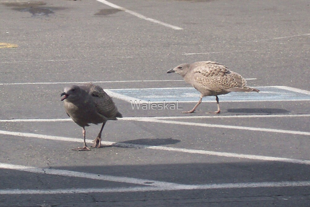 Why did the baby Seagull cross the road? by WaleskaL