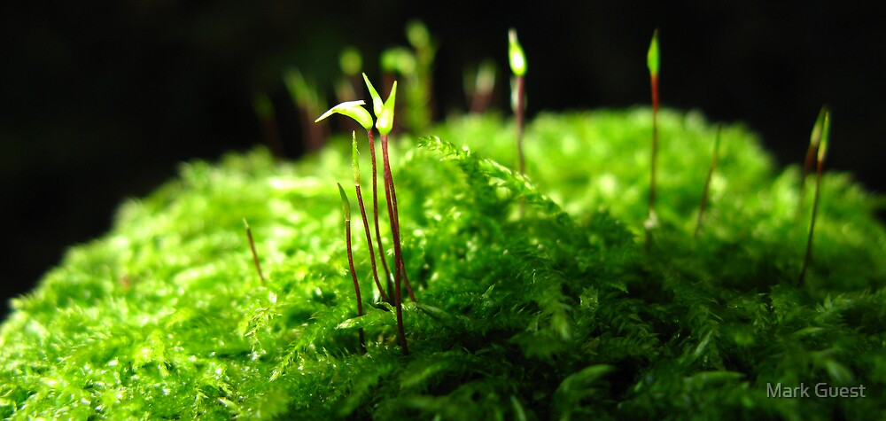 Macro Mini Forest - Lychen by Mark Guest