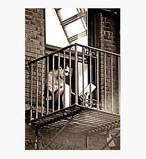 modern enslavement Photographic Print