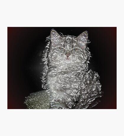 Plastic Cat Photographic Print